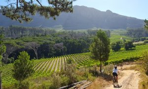 MTBSouthAfrica.co.za | Wine Farms - Cape Town, Western Cape