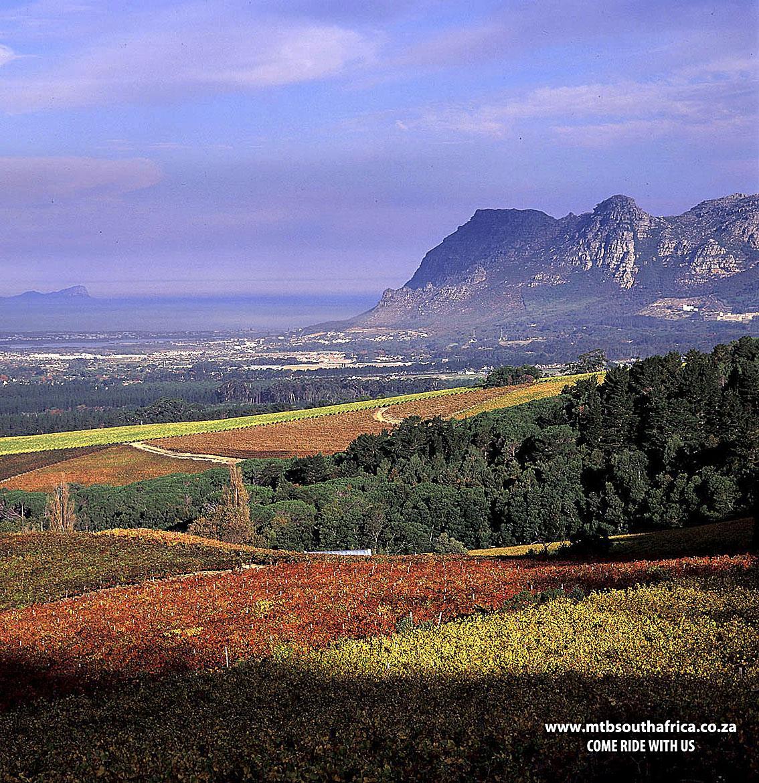 Mountain-Biking-South-Africa-MTB-SA-MTB South Africa-Group-Constantia-Greenbelts-Chapman's-Peak-Noordhoek-Wagon-Trail-Tokai-Trails-Wine-Farms-Packages